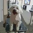 Dominó Kutyakozmetika