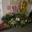 Magdi Virág - Királymajor Üzletház
