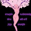 Amina Test és Lélek Rekreációs Központ képe