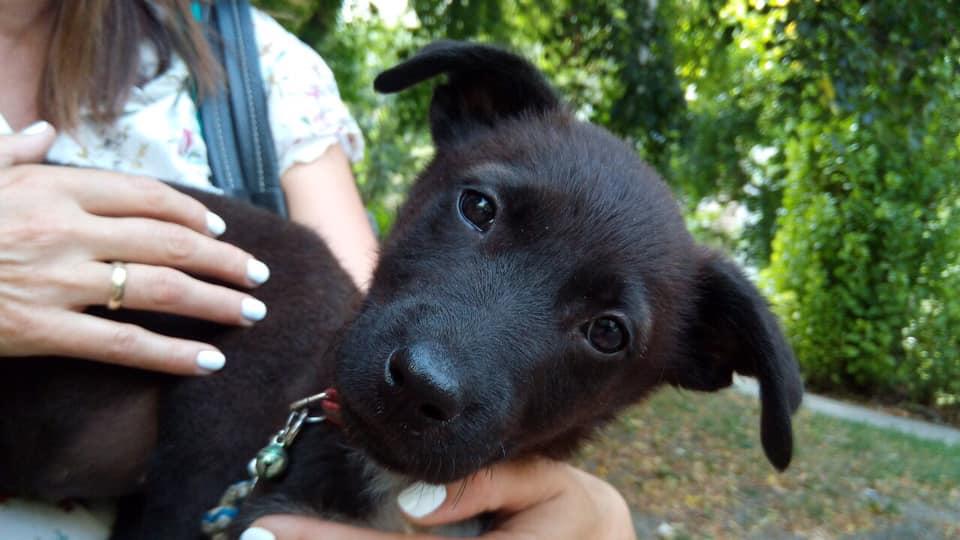Fotó: szurkolók az állatkínzás ellen, FB
