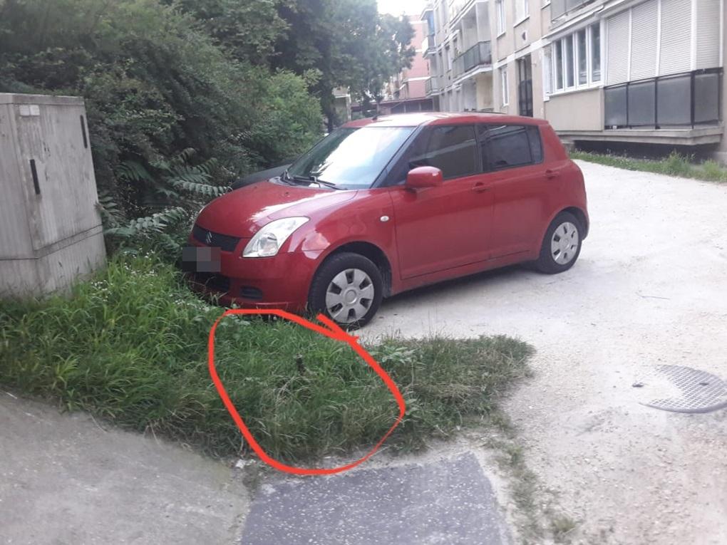A fűtől nem is látható (olvasói fotó)